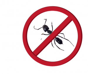 stop ants in the home
