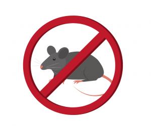 prevent mice in the home