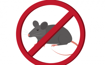 Prevent Mice in the Kitchen